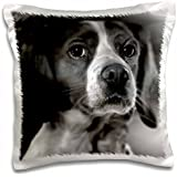 VWPics Dogs n Cats - Epagneul breton - 16x16 inch Pillow Case