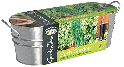 mr-fothergills-24804-garden-time-herb-garden-windowsill-kit-green