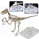 deAO Dinosaur Fossil Skeleton Figure Palaeontology Kit for Children Educational Simulated Dinosaur Bones Set (Velociraptor)