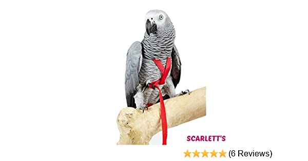 Adventure Bird Harness Medium Red