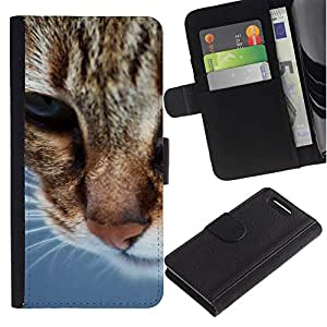 LASTONE PHONE CASE / Luxus Leder Brieftasche Hülle Kartenhalter Flip Schutz Etui für Sony Xperia Z1 Compact D5503 / American Shorthair Whiskers Orange Cat