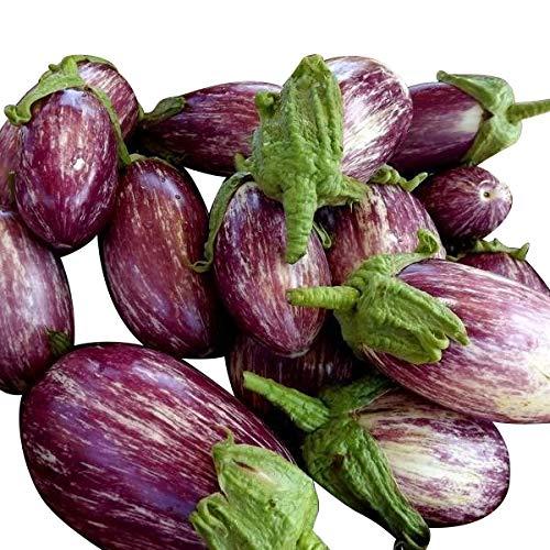 Aubergine (Violett-Gestreift) 10 Samen - Aubergine Violett