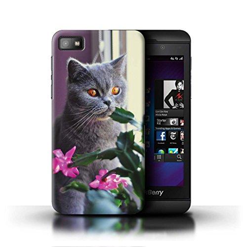 Stuff4® Hülle/Case für BlackBerry Z10 / Britisches Blau/Kurzes Haar Muster Katze/Katzenrassen Kollektion