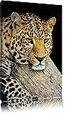 Pixxprint Ruhiger Leopard Format: 60x40 auf Leinwand, XXL riesige Bilder fertig gerahmt mit Keilrahmen, Kunstdruck auf Wandbild mit Rahmen, günstiger als Gemälde oder Ölbild, kein Poster oder Plakat