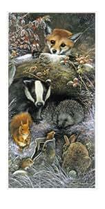 Christmas Eve Barn Owl Slim Christmas Card Pack