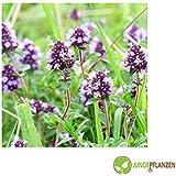 Semillas de hierbas - Tomillo / invierno alemán - Thymus vulgaris - Lamiaceae 200 semillas