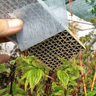150 Florfliegenlarven - Nützling u.a. gegen Blattläuse und Thrips