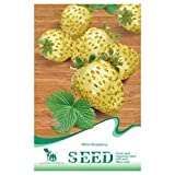 SODIALRSeeds White Strawberry Delicious Rare palatable Fruit Seed