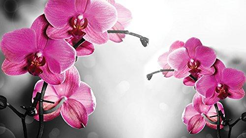 fotomurale-foto-wallpaper-carta-da-parati-foto-orchidee-1034-sfondo-blu-carta-254-cm-largo-x-184-cm-