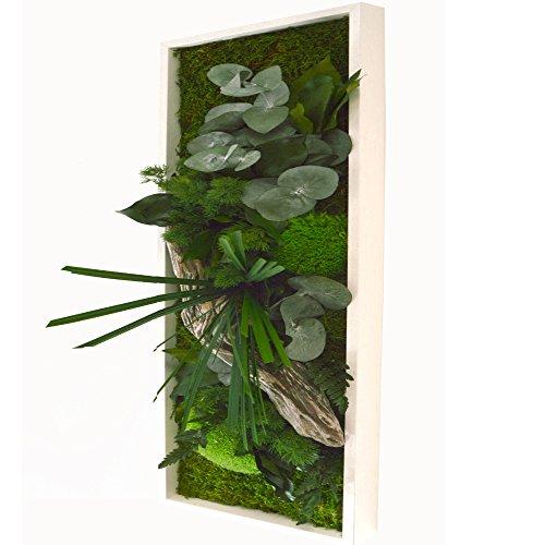 marco-vege-tal-natural-y-madera-20x-70cm-conexiones-de-plantas-naturales-stabilisierten-sin-no-cuida