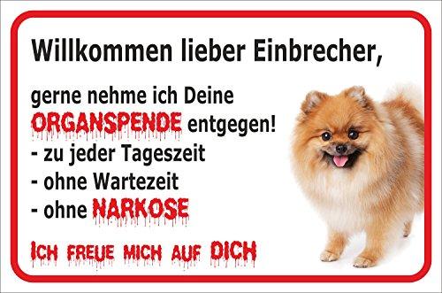 """Schild - Vorsicht GELBER Spitz Zwergspitz Pomeranian \""""Einbrecher\"""" (20x30cm)"""