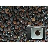 Cataire - 70 graines - Nepeta Cataria - Catnip (Herbe à Chats) - SEM03