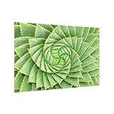 Bilderwelten Spritzschutz Glas - Spiral Aloe - Querformat 2:3, HxB: 40cm x 60cm