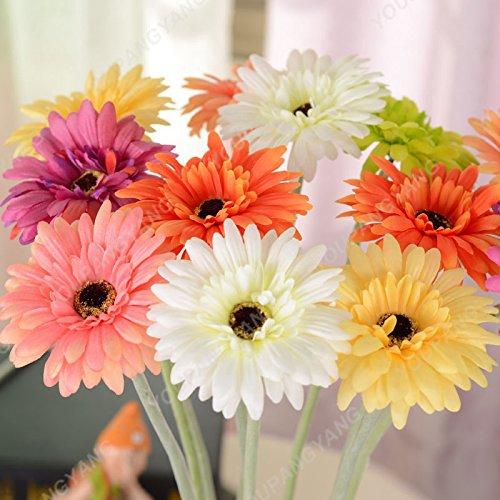 100PCS chrysanthème Graines Bonsai vivace Fleurs Belle graines de fleurs en pot plantes pour jardin Mini 25 Couleurs disponibles 13