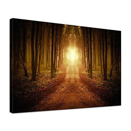 Einsame Das Klavier (Leinwand Bild edel Natur Wald Einsamer Weg ins Licht Größe 100 x 80 cm)