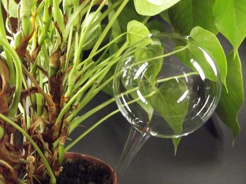 8 Stück, Durstkugel / Bewässerungskugel 7 cm Lauscha