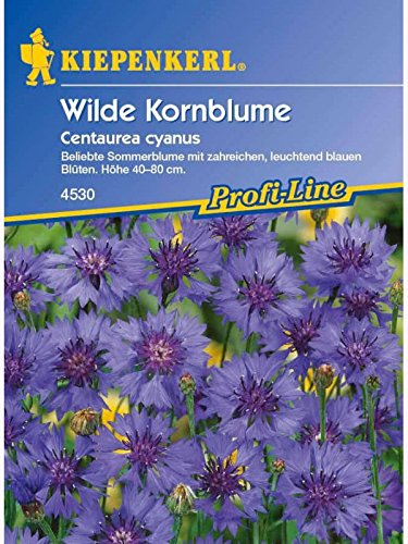 Centaurea cyanus Kornblume himmelblau