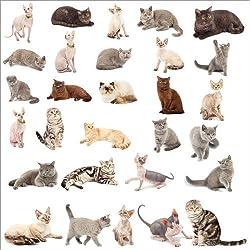 Poster 50 x 50 cm: Katzenrassen von Editors Choice - Hochwertiger Kunstdruck, Kunstposter