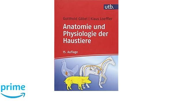 Anatomie und Physiologie der Haustiere - Klaus Loeffler, Gotthold ...