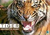 Tiger: Gestreifte Jäger aus Asien (Wandkalender 2020 DIN A3 quer): Tiger: die größte Katzenart der Erde (Monatskalender, 14 Seiten ) (CALVENDO Tiere) - CALVENDO