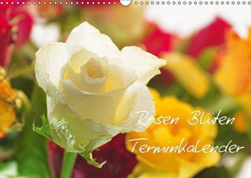 Rosen Blüten Terminkalender (Wandkalender 2019 DIN A3 quer): Ein Terminkalender in dem die Schönheit und die Vielfältigkeit der Rosen zu sehen ist (Geburtstagskalender, 14 Seiten ) (CALVENDO Natur)