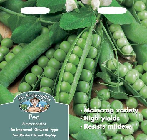 mr-fothergills-10230-ambassador-pea-seed