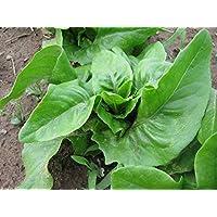 PlenTree Organic Seed Barese Chard - Médico comestible