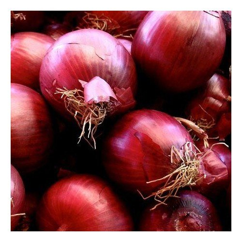 Oignon rouge de Brunswick 200 graines