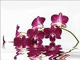 Artland Qualitätsbilder I Wandtattoo Wandsticker Wandaufkleber sydeen Phalaenopsis Orchidee vor freistehendem Hintergrund und großartiger Reflexion Botanik Blumen Orchidee Fotografie Lila A7QQ