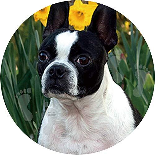 GBZ Fußmatte für drinnen und draußen, wetterfest, 50 cm, Boston Terrier Tapete, 2 Stück