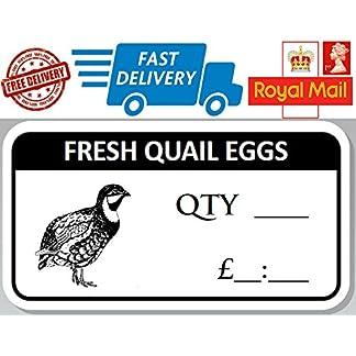 100 x Fesh Quail Egg Box Labels Quail Egg Stickers 100 x Fesh Quail Egg Box Labels Quail Egg Stickers 51RHFxhewtL