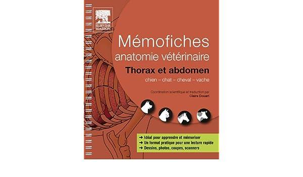 Mémofiches anatomie vétérinaire - Thorax et abdomen eBook: Claire ...