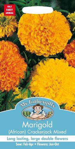 mr-fothergills-10759-marigold-african-crackerjack-mixed-flower-seeds