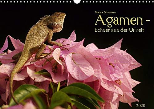 Agamen - Echsen aus der Urzeit (Wandkalender 2020 DIN A3 quer)