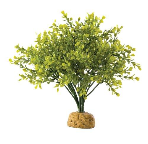 Exo Terra Buchsbaum