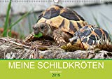 Meine Schildkröten (Wandkalender 2019 DIN A3 quer): Bilder von meiner Schildkrötengruppe (Monatskalender, 14 Seiten ) (CALVENDO Tiere)