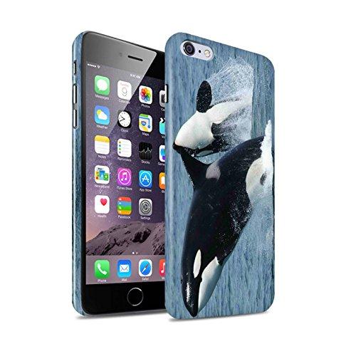 STUFF4 Glanz Snap-On Hülle / Case für Apple iPhone 7 Plus / Schwarzspitzenhai Muster / Marine Tierwelt Kollektion Schwertwal/Orca