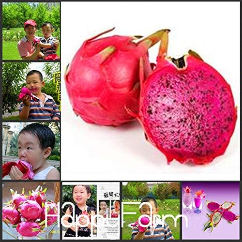 Pinkdose Nouvelle arrivée 2018! 50 pièces/lot le bonsaï rare pitaya rouge, délicieux jardin de fruits usine de fruit du dragon, VDJEZM