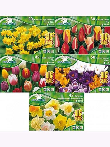 Blumenzwiebeln BIG-BAG-MEGA-Sortiment Narzissen-Krokusse-Tulpen