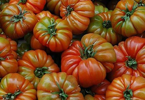 Portal Cool 100 Semillas: Las semillas de tomate Raf, Variedad Tamano Grande, Viejo tomate de la herencia española, Andalucía