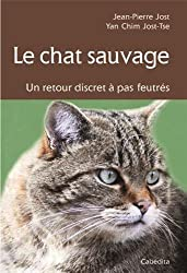 Le Chat Sauvage, un Retour Discret a Pas Feutres