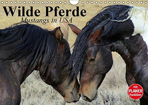 Wilde Pferde. Mustangs in USA (Wandkalender 2019 DIN A4 quer): Die Mustangs der USA in Wyoming und Utah (Geburtstagskalender, 14 Seiten ) (CALVENDO Tiere)