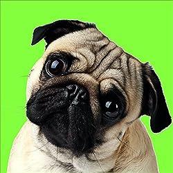 Cojín de perro carlino. Impresión Digital.