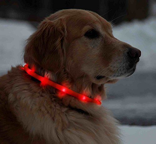 Licht LED-Leuchthalsband für Hunde, 70 cm, universell kürzbar - Rot by CASCACAVELLE