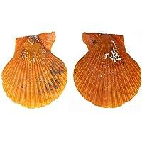 Beautyrain Beautiful Pearl Mussel Pectinid Crafts Accessories Natural Pearl 10PCS Natural
