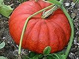 GEOPONICS $ 96 + LOT (48) Seed Packs pomodoro colorato CherryHeirloom saporito Colore