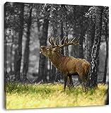 röhrender Hirsch im Wald schwarz/weiß, Format: 70x70 auf Leinwand, XXL riesige Bilder fertig gerahmt mit Keilrahmen, Kunstdruck auf Wandbild mit Rahmen, günstiger als Gemälde oder Ölbild, kein Poster oder Plakat