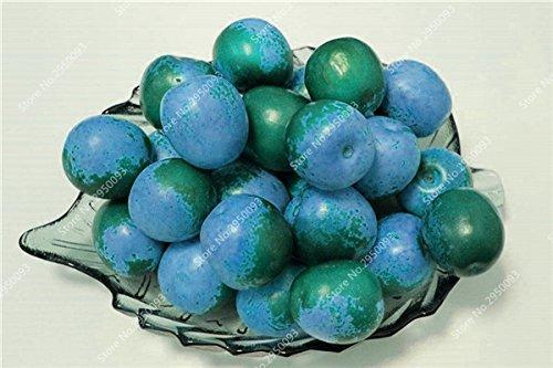 20pcs / sac exotiques japonais Jujube Graines Succulent non-OGM Bonsai Fruit d'ornement Arbre en pot plante facile à cultiver 2