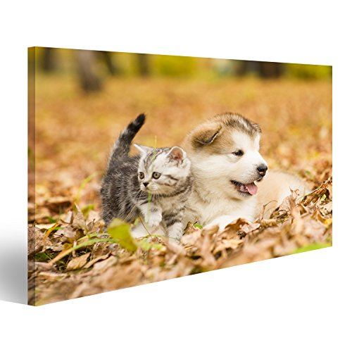 islandburner Tableau Tableaux sur Toile Chien Et Chat Image, Images, Poster, Impression