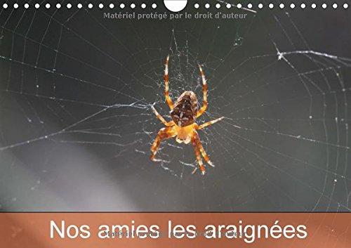 Nos amies les araignées : Le monde des araignées et des insectes. Calendrier mural A4 horizontal 2017
